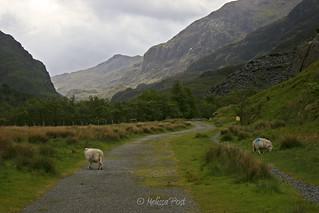 Near Snowdonia
