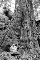 2013_08_19_cal_001 (mitch98000) Tags: california tree buddha bigsur sequoia