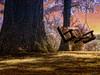 Hanging in Solitary (DaraDPhotography) Tags: summer tree nature rural pennsylvania swing infrared ie textured trolled awardtree magicunicornverybest sailsevenseas pixeldustphotoart pdpasmokin pdpacanvassunrise