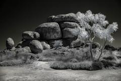 The other side. (erglis_m (Mick)) Tags: blackandwhite bw tree contrast canon landscape ir blackwhite interesting rocks desert canoneos20d infrared dust devilsmarbles infraredfilter stuarthighway theoutback centraldesert tanami karlukarlu tanamidesert