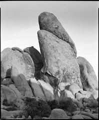 Joshua Tree Rock (Summicron20/20) Tags: camera field inch os rodinal ilford fp4 v10 f9 schneider 125 deardorff 10x12 355mm gclaron
