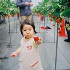my little girlfriend-strawberry garden (chant0m0) Tags: film japan kids analog strawberry fuji nagoya rolleicord pro160ns mylittlegirlfriend