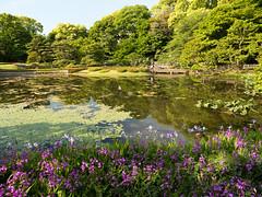 P1560356.jpg (Rambalac) Tags: flowers plant water japan pond asia вода пруд цветы япония растение азия lumixgh4