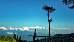 Kanchenjunga from Darjeeling (sajan-164) Tags: kanchenjunga kangchenjunga third highest peak darjeeling india sajan164 mountain