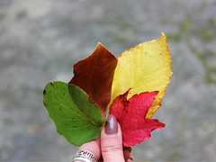 Stages of dying (Lia_Gordon) Tags: leaves leaf autumn dying