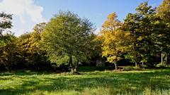 Madonna del Faggio (Franco Vannini) Tags: madonnadelfaggio tuscany toscana beech oak faggio quercia autunno goldenretrievers