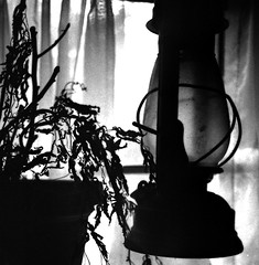rubysLampRunsOut (device9) Tags: blackandwhite bw caffenol film folliage lamp monochrome analog