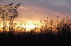 SUNSET AT THE MEADOW (Marie Jestin ) Tags: sunset meadow silhouette britanny bretagne kernic sky nature natura