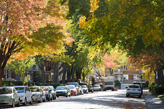 Colourful Street Cover (caribb) Tags: montreal montral quebec qubec canada urban city 2016 fall autumn fallcolors fallcolours foliage autumnfoliage mapletrees maple autumncolours autumncolors trees street