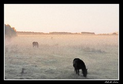 Ochtendmist 1 (Rob denkt) Tags: mist paard horse morning waterland