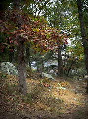 Autumn Meadow (iAM Peterson) Tags: wisconsin fall autumn nature oak meadow peace hiking baraboo devilslakestatepark light sony a7rii a7r2 50mm