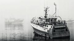 Waiting (Jibaow) Tags: 2014 bretagne d5000 nikon france fishing pcheurs sea mer brest le conquet finistre