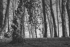 Woods (Kuzz1984) Tags: trees woods forrest uma drvee otok slavonija hrvatska croatia bbq rotilj