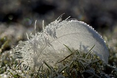 frostig  /  frosty (Ellenore56) Tags: 29112016 frostig frosty frost 7°c kalt cold cool gefroren frozen ice iced vereist frosted icy rimy freeze wetter weather feder feather quill plume eiskristalle kristalle eis diamond icecrystal crystal lichtbrechung refraction wasser water h2o detail makro macro moment augenblick sichtweise perception perspektive perspective reflektion reflection reflexion farbe color colour licht light inspiration imagination faszination magic magical natur nature nahtour sonyslta77 ellenore56