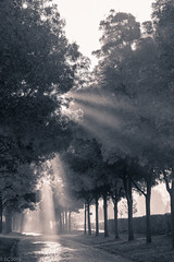 L'alle (EC2015) Tags: cimetieredepantin lumire automne cimetiere cimetire brume