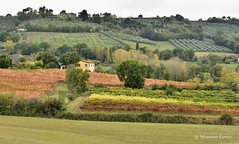Colori dell'Umbria in Autunno (Massimo Greco *) Tags: paesaggiumbri autunno vigneti absolutelystunningscapes