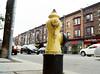 Small Dog's POV (Georgie_grrl) Tags: filmphotographyscavengerhunt bydowntowncamera october2016 challenges idea fun competition pentaxk1000 rikenon12828mm toronto ontario firehydrant hydrant smalldogspov humour gettingthelowdown