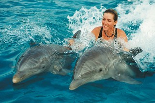 PLaying with Dolphins in Goa