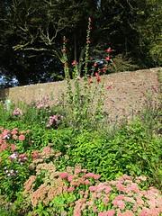 A Joyful border (JulieK (finally moved to Wexford)) Tags: wall canonixus170 flowers autumnjoy plants herbaceousborder wexford ireland irish flora summer colourful hww
