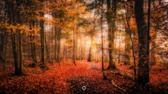At the End of the Day (Augmented Reality Images (Getty Contributor)) Tags: autumn canon colours fall forest landscape leaves leefilters light longexposure nature perthshire scotland trees woodland