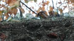 Glass shards (FinouCat) Tags: wall glass shards bottles