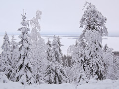 National Park Koli - Finland (Sami Niemelinen (instagram: santtujns)) Tags: koli suomi finland kansallispuisto national park mets forest talvi winter lumi snow puu tree patikka retkeily hiking trekking luonto nature maisema landscape pohjois karjala north carelia lieksa jrvi pielinen lake