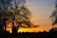 A Welcome Sign (hapsnaps) Tags: hapsnaps hampshire newforest ashleywalk 2016 winter trees carparkboard sunset sky orange naturethroughthelens