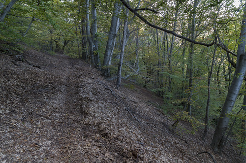 Path through the beech forest, 10.10.2014.