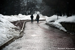 | Winter comrades (Osama Alsulami  ) Tags: turkey trkiye turkish 2012 bolu   abant