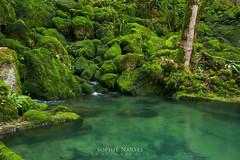 Eden (Le Monde Chromatique) Tags: wild green nature water moss eau sophie vert eden mousse sauvage narses