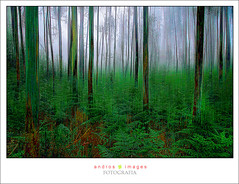MAR DE ARBOLES, el bosque misterioso // SEA OF TREES, the mysterious forest (ANDROS images) Tags: pictures light naturaleza color luz interesting photos places images photographs fotos lugares passion lightreflection diferente andros interesante fotografas miradas pasin tonos throughthelens colortones viviendo loveofnature living carefortheearth theworldinpictures fotoandros androsphoto androsphoto fotoandros sitiosespeciales franciscodomnguez naturalezaviva amoralanaturaleza imgenesdenuestromundo slotenemosunatierra planetatierra porunmundolimpio amarlatierra cuidemoslatierra portierrasespaolas nuestromundo unahermosatierra reflejosdeluz pasinporlafotografa atravsdelobjetivo elmundoenimgenes photoandrosplaces placesspecialsites differentnaturelivingnature imagesofourworld weonlyhaveoneearthplanetearth foracleanworldlovetheearth onspanishterritoryourworld abeautifulearth passionforphotographylooks