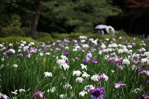 菖蒲園の昼下がり