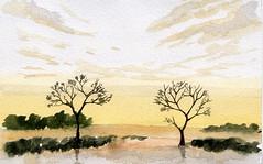 alberi 32