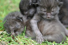 Kitten Tower (MrHRdg) Tags: baby black abandoned cat reading kitten dumped millroad burghfield
