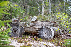 I found Fred Flintstone's car! (Korona4Reel) Tags: trees lake canada tree green art nature forest outside outdoors moss woods nikon forestry glen dirt bark treebark damp d800 moist fredflintstone nikond800 lakegeorgens koronalacasse koronalacassephotography korona4reel