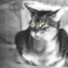 Waiting in the SPCA (1withone) Tags: bw cat waiting help discarded givenup adyke pussyat