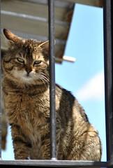 Gatti (Enchanted Loom) Tags: gatti