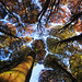 Autumn at Horto