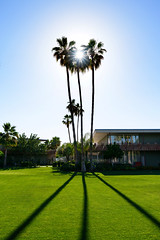 Hotel Valley Ho (Tom Stoncel) Tags: silhouette palms nikon tomstoncel d800e sigma35mmart
