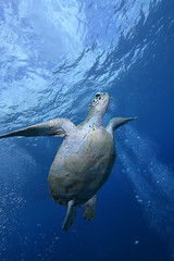 2012 11 METTRA OCEAN INDIEN 4949