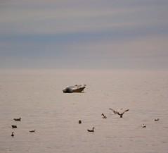 (Marie EG) Tags: ocean summer boat skne sweden august trelleborg sdersltt
