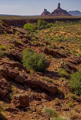 DSC02911--Valley of the Gods, Utah (Lance & Cromwell back from a Road Trip) Tags: utah sony roadtrip 2012 valleyofthegods sanjuancounty a55 sonyalpha sal16105
