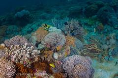 Underwater purple landscape II (Alexandre R. dos Santos) Tags: cruise fish coral indonesia underwater wideangle snorkeling adventures abel lombok komodo underwaterphotography pinkbeach pantaimerah abeltours abeltravel lomboktraveladventures