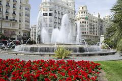 Valencia, plaza del ayuntamiento (Twin Work & Volunteer) Tags: plaza flores verde valencia spain rojo arquitectura edificios agua fuente ciudad paisaje urbano turismo csped espaa