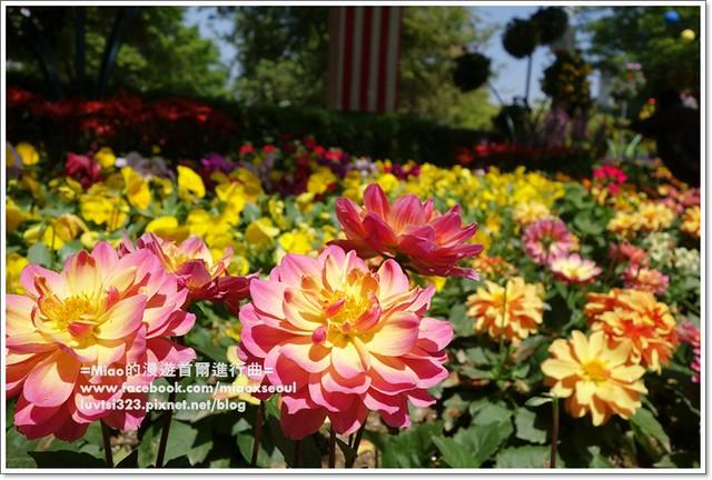 고양국제꽃박람회014