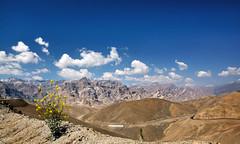 Ladakh (gurpreet_singh.) Tags: flowers blue sky india landscape heaven shrub bliss pure himalayas ladakh foreground