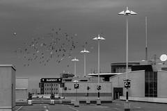 Parkdeck Gesundbrunnen-Center (Sonne 2208) Tags: parkhaus parkdeck vgel vogelschwarm tauben laternen schwarzweis mono monochrom gesundbrunnen gesundbrunnencenter berlin