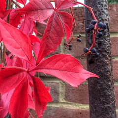 16-294 (Gray Singer) Tags: texture pole bricks rust berries red autumn leaves