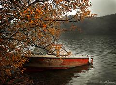 Barca Ullibarri. N 75 (Yon Ibarrra) Tags: barca boat lluvia rain invierno winter agua water pantano swamp arbol tree naranjas oranje verde green