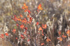 Colors of late Autumn (Inside & Out Photography) Tags: flowers branch branches orange glow sun horsetooth hiking bright translucent beautiful colorado autumn fall red green yellow